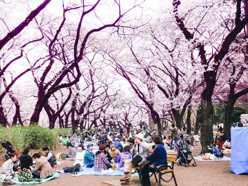 top_10_free_tokyo_cherry_blossoms
